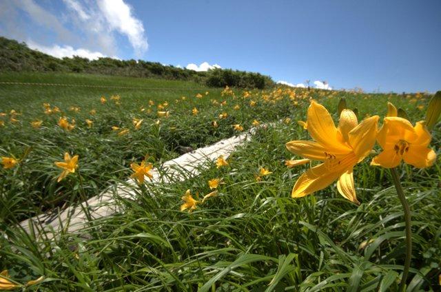 月山弥陀ヶ原の花2