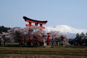 月山・大鳥居・桜2